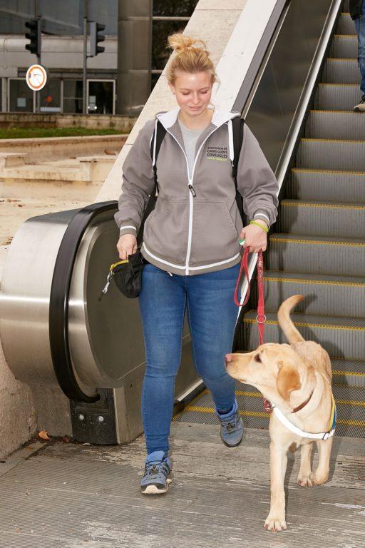 Éducateur chien guide